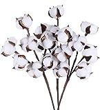 Ruiuzioong Relleno de flores artificiales de algodón seco natural para casa de campo, arreglo floral, decoración para fiestas en el hogar (3 piezas de vapor)