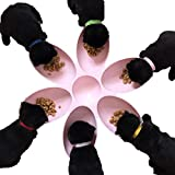 Hankyky 6-Meal Puppy,Cat, Dog, Pet, Litter Food Feeding & Weaning Feeder Bowl Dish Puppy Food Feeder Dispenser Bowl