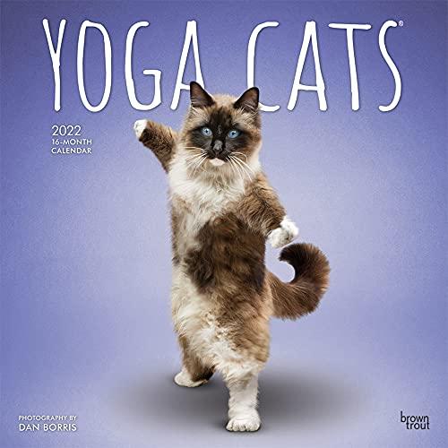 Yoga Cats - Joga-Katzen 2022 - 16-Monatskalender: Original BrownTrout-Kalender [Mehrsprachig] [Kalender] (Wall-Kalender)