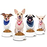 Pug Chihuahua Jack Russell Dog Dinner Photo Large Wall Art Poster Print Thick Paper 18X24 Inch Fotografía Pared Impresión del Cartel