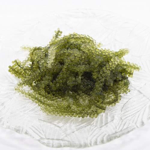 純沖縄産 A品 朝摘み 生海ぶどう オジーの夢 500g 海月 ミネラルたっぷり 海の長命草として知られる珍味 粒の大きさ・形・食感ともにおすすめするクビレヅタ ぷちぷち食感 本物の沖縄県産海ブドウ