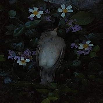 The Bird as Prophet