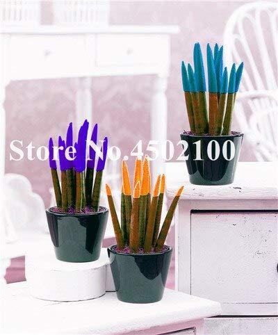 SVI Fresh 100 PC Aglaonema Spp Sansevieria semillas de plantas para plantar color mezclado