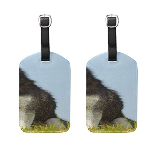 E Card Dog Pet Husky Loki Denmark Holland Model Pattern Pu Leather Id Tags Business Card Holder Labels Baggage Suitcase Luggage Tags Travel Accessories