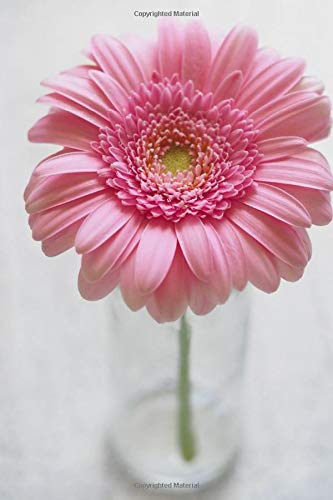 Gerbera Lined Blank Notebook Drawing Pad: Unlined Ruled Pages Book (6 x 9 inches) - 120 Pages Journal II Planning, Drawing, Sketching, Writing,: Pink Gerbera Flower gift book for enthusiast