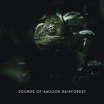 Sounds Of Amazon Rainforest