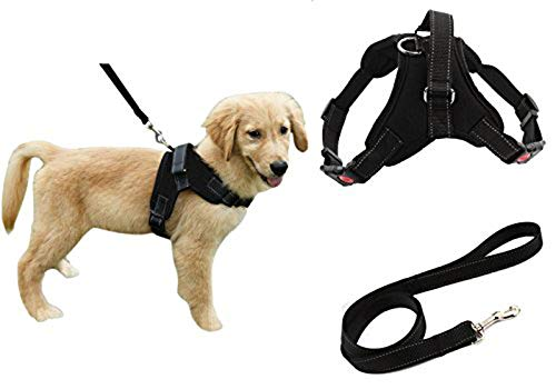 Collar or Harness for Puppy Training