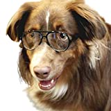 G010 Dog pets Aviator Turbo Sunglasses glasses goggles w retainer strap Medium breeds 20-50lbs (Black-clear lens, uv400)