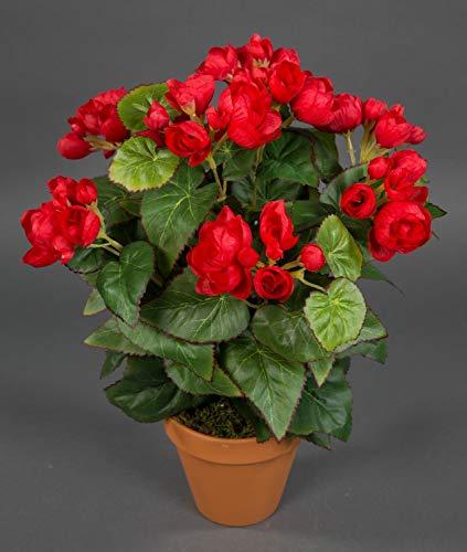 Seidenblumen Roß Begonie 38cm rot im Topf LM Kunstpflanzen Kunstblumen künstliche Blumen Pflanzen Begonienbusch