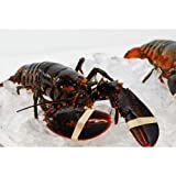 Live New England Lobster 1.25 lb avg, 10 lb case, approximately 8 Lobsters