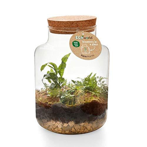 Ecoworld Jungle Biosphere - Komplett DIY Flashengarten Set Inklusive Pflanzen - Basic Glass XL Ø 22 cm Höhe 33 cm