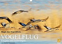 Magie des Augenblicks - Vogelflug - Eleganz auf Schwingen (Wandkalender 2022 DIN A3 quer): Eindrucksvolle Bilder von fliegenden Voegeln, fotografiert von Winfried Wisniewski (Monatskalender, 14 Seiten )