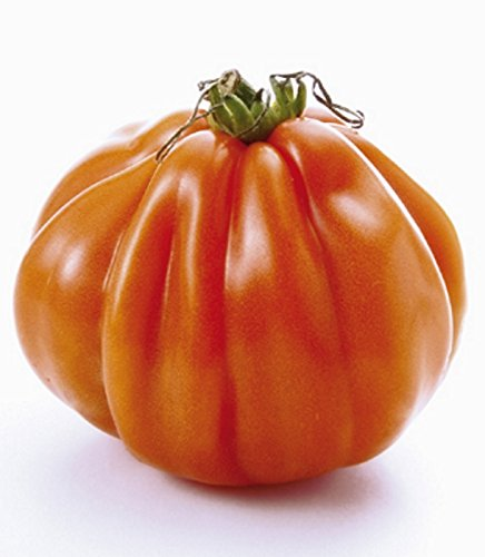 Tomaten Fleischtomate Ochsenherz Borsalina Samen