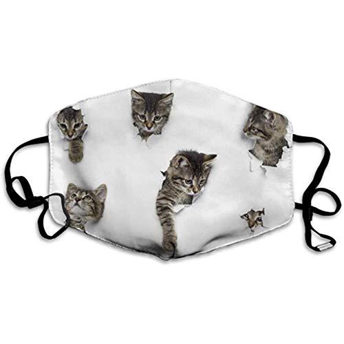 Kätzchen in Papierlöchern Kleine graue Tabby-Katzen Staubschutz Mundschutz Mundschutz Staubschutz
