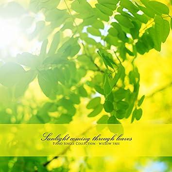 나뭇잎 사이로 오는 햇빛