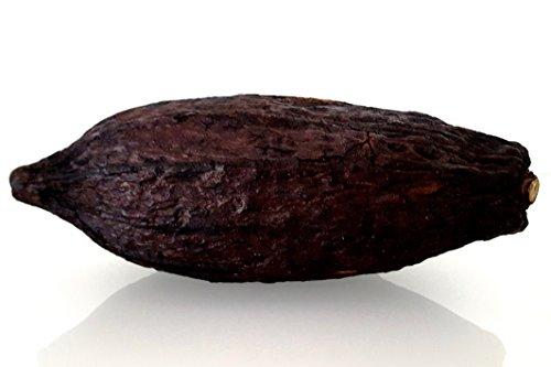 "CleanPrince 1 Stück echte ganze Kakaoschote""groß"" Länge ca. 14-18 cm, Höhe ca. 6-10 cm, Kakaofrucht Kakaobohne Kakao, getrocknet, frisch getrocknet, Schokoladenbraun, Dekofrüchte"