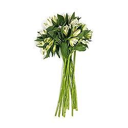 365 Everyday Value, Cut Flower Alstromeria Stems Whole Trade Guarantee