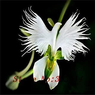 ``Hot `Hot selling 100pcs Peru Monkey Face Orchid Flower Seeds Phalaenopsis Bonsai Flower Plant Seeds DIY home garden