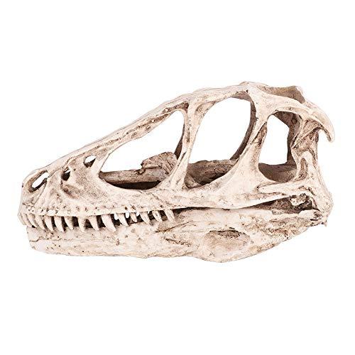 Weikeya Exquisito modelo de calavera de dinosaurio esqueleto, para casa, oficina, resina respetuosa con el medio ambiente, calavera de dinosaurio de resina