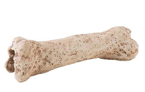 Exo Terra PT2842 Dinosaurier Knochen