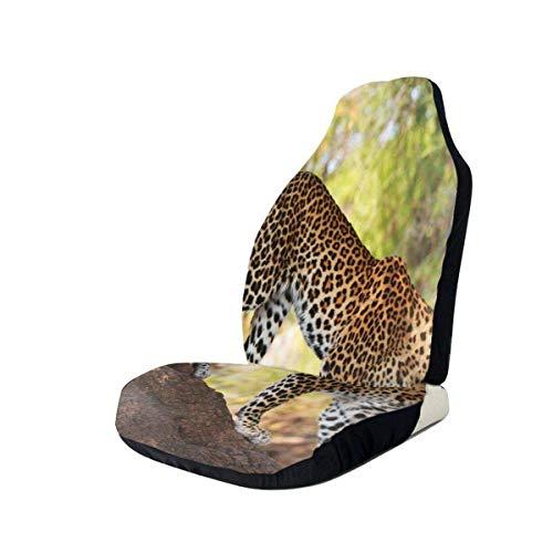Drew Tours Auto Vordersitzbezüge Fahrzeugschutz, Leopard Panthera Pantus auf Baum Naturschutzgebiet Botswana Fleischfresser Tier, Fit die meisten Autos, Limousine, LKW, SUV