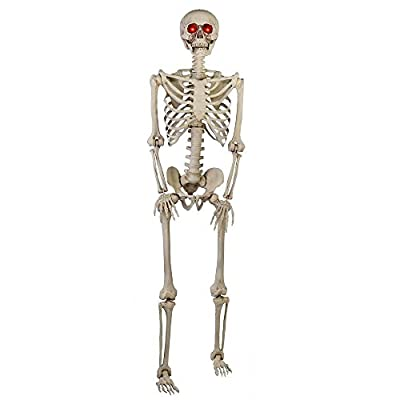 5 ft. Poseable Skeleton from Home Accents HolidayGanmm