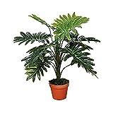 Alta qualità artigianale piante ammorbidirsi Per interni