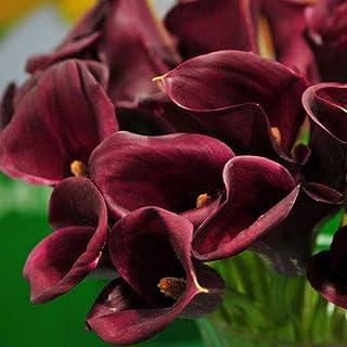 GEOPONICS Semillas: ZLKING 1Pcs cala Bulbos en maceta Balcón Planta de flor de la cala bulbos pueden Absorción colores mezclados No Bonsai: Violeta