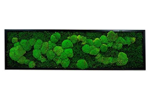 Moosbilder Wandgestaltung, Bild mit Moos und Bilderrahmen, Moosbild, Mooswand, Wandbild, Kugelmoos Moosplatte Pflanzenbilder Moosbilder versch. Maße günstig (140 x 40 cm, schwarz)