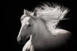Black and white horse poster: Grey Ghost