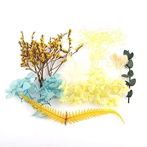 Yusheng 1 Caja de Flores secas de Colores para Hacer Velas perfumadas de Bricolaje, Pinturas de Plantas Hechas a Mano, resinas epoxi, Colgantes, Botellas flotantes, artesanías de Flores secas