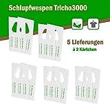 Schlupfwespen gegen Kleidermotten 6000 Stück x 5 Lieferungen auf 2 Karten