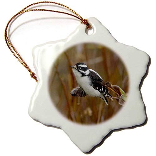 VinMea Downy Woodpecker Bird, Grand Teton Np, Wyoming-Us Rnu-Rolf Nussbaumer Snowflake Ornament Christmas Ornament Keepsake