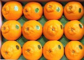 [産直宮崎県] 柑橘類 【特甘】 デコポン(しらぬい) 赤秀 10〜12玉化粧箱入り。