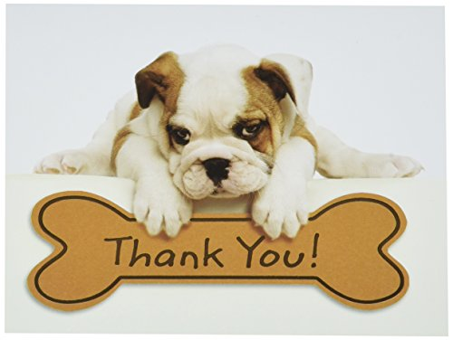 Design Design Bulldog Puppy Thank You Note Cards 20 Count 119-04031