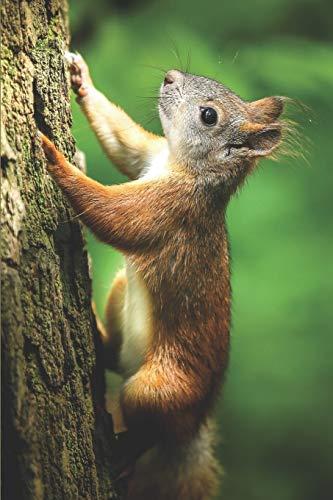 Eichhörnchen Notizbuch: blanko Malbuch / Tagebuch / Notizbuch ohne Linien mit Eichhörnchen Bild als Motiv   120 Seiten a5+