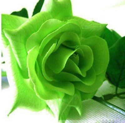 200pcs/pack Rare Pays-Bas Rainbow Rose Flower Seed Outdoor Blooming Bonsai Plante en pot décoratif Decor Garden Livraison gratuite 5