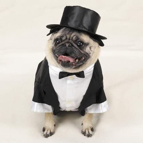 Max 69% Inventory cleanup selling sale OFF Casual Canine Dog Tuxedo Costume - XS