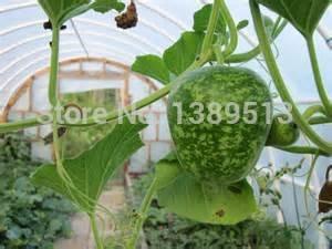 10 / Sac Gourd, mouchetée d'Apple Gourd Seeds - Excellent pour les projets Fun graines végétales rares peuvent manger