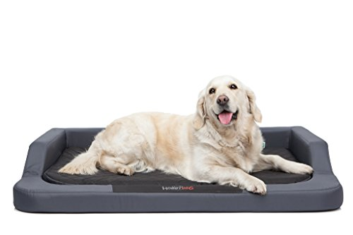 Hobbydog Cama para Perros XXL Melgrc2 Hobbydog XXL 120 x 80 (R3) Medico Lux (Piel sintética), Color Gris y Negro, con colchoneta viscoelástica Ortopédica, XXL, Gris - Negro