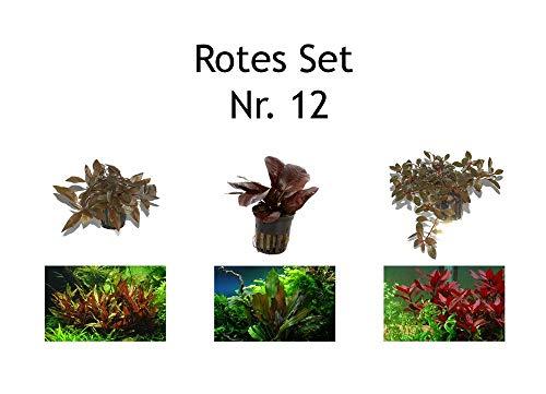 Tropica 3 x rote Aquarium Topf-Pflanzen