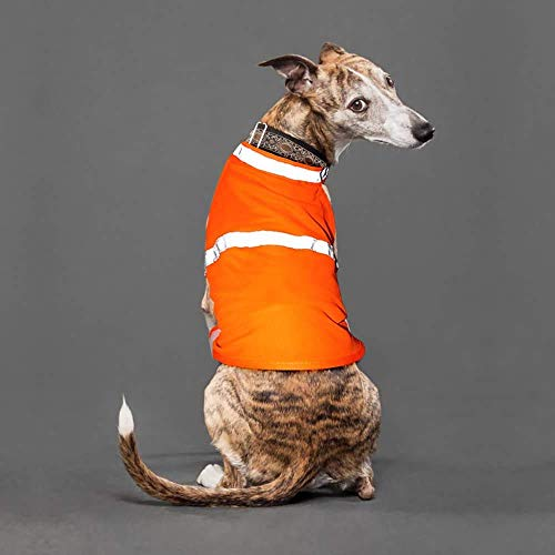 Clan_X Reflective Dog Vest for Night - Fluorescent Dog Apparels Adjustable Dog Jacket Lighted Dog Vest Ideal to Keep Dogs Safe While Walking & Hunting (M, Orange)