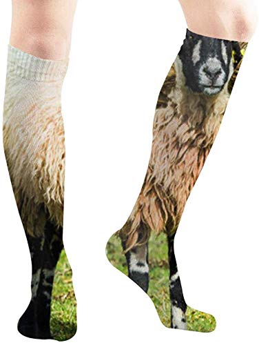 ouyjian Swaledale Ram Male Sheep Curly Horns Animals Wildlife Casual Socks Athletic Socks for Women and Mens Sports, Travel, Party Etc 19.7 Inch