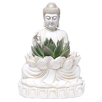 Best buddha planter pot Reviews