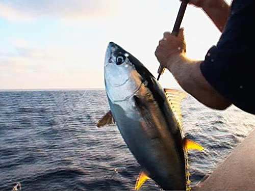 Lighting Up Socal Yellowfin on The Searcher