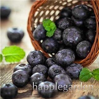 Bloom Green Co. Â¡Venta!100 Unids/bolsa Arándano Bonsai Fruta Orgánica Comestible Fruta planta Enano Arándano Bonsai Ãrbol Planta en maceta para el jardín de su casa: 23