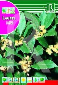 Semilla laurel - Rocalba
