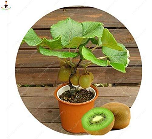 Sump Fresh 200pcs semillas de kiwi para plantar verde