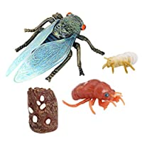 #N/A 細心蝉ライフサイクルフィギュア、教育アクセサリー私たちのライブにてんとう虫キットおもちゃ