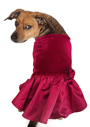 Tail Trends Special Occasion Dog Dress Velvet Costumes for Small to Medium Sized Dogs